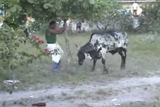 Crianças de Governador Celso Ramos (SC) têm aula sobre a farra do boi