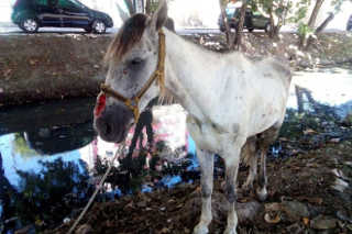SE Aracaju cavalo de rua 1 H