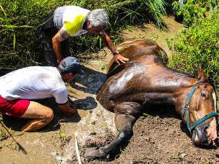 SP SaoJose egua atolada H