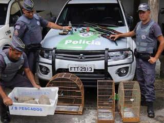 Operação da PA apreende 21 animais silvestres em Ubatuba, SP