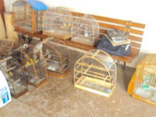 Polícia apreende 12 pássaros que estavam em cativeiro em Guararapes, SP