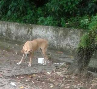 Cadela é abandonada e fica 12 horas presa em árvore em Santos, SP
