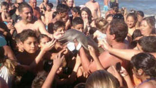 ARGENTINA golfinho 1456760028 recorte1 H
