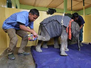 India homem botas elefantes H