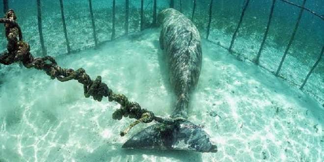 Mergulhadores chocados ao descobrirem animais presos em jaulas submersas