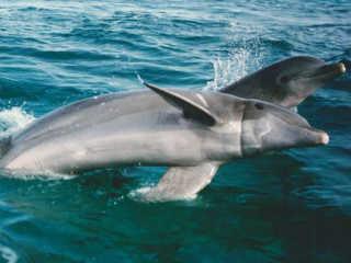 Golfinhos em exposição: como as 'Seaworlds' do Reino Unido afundaram
