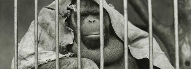 EUA imagens zoologicos passado D