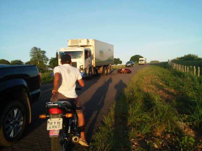 Motorista atropela animais propositalmente e revolta redes sociais