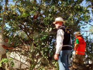 FPI resgata cerca de 100 pássaros em viveiro clandestino em Santana do Ipanema, AL