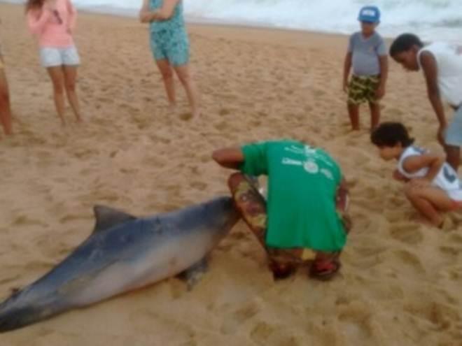 Banhistas localizam golfinho morto encalhado na Praia de Tabuba, em AL