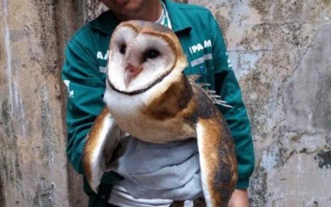 Cresce resgate de animais silvestres em áreas urbanas, no Amazonas