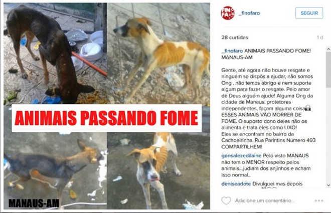 ONG denuncia abandono de animais, na Cachoeirinha, em Manaus, AM