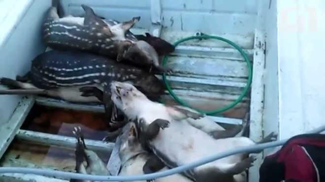 AP video cacada animalsilvestres 324
