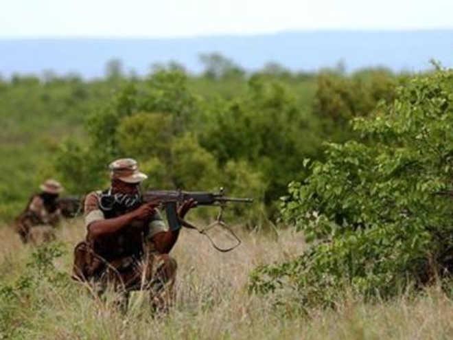 206 caçadores de rinocerontes detidos até agora neste ano na África do Sul