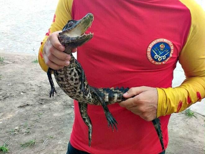 Amazonas Manaus encontrado jacare2