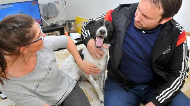 Conheça Rocky, o cão que ressuscitou