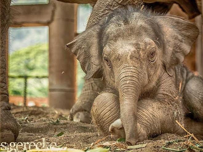 Asia elephantnaturalpark 1