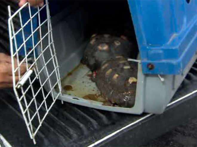 Após denúncia, mulher vai parar na delegacia por maus-tratos a animais recolhidos na rua em Salvador, BA