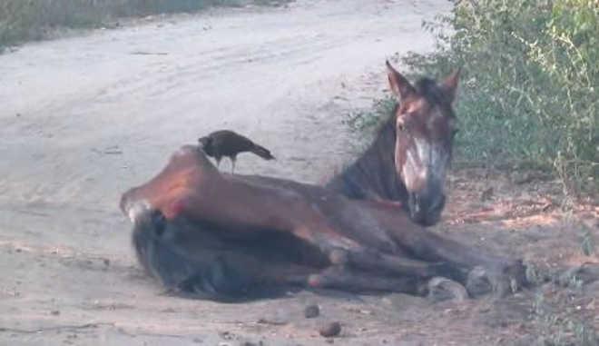 BA itambe cavalo FHJOYUw
