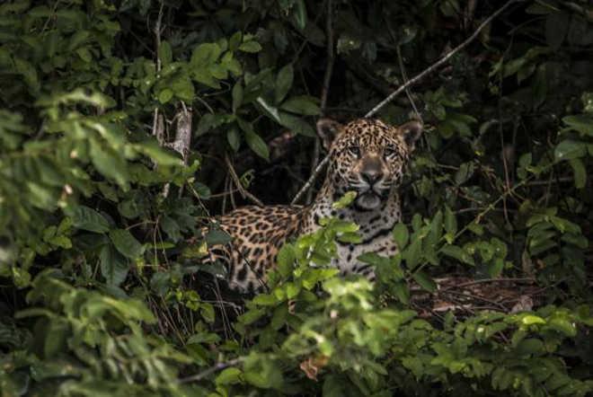 Brasil projeto garantir animais estradas