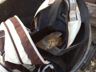 Gato ferido foi descartado como se fosse lixo numa mochila