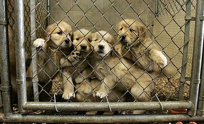 Capital do Canadá vai proibir venda de cães e gatos em lojas de animais