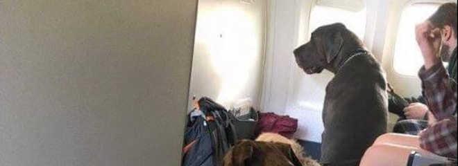 Piloto quebra regras para resgatar animais dos incêndios no Canadá
