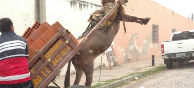 Revoltante: Burro quase é enforcado em carroça, em Quixadá, CE