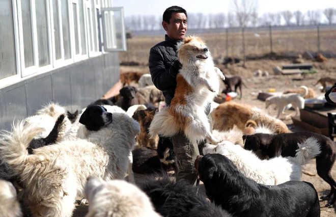 Milhares pelo mundo subscrevem petições contra festival de carne de cão