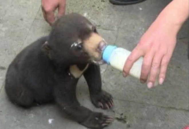 Adotou cão e semanas depois descobriu que era um urso