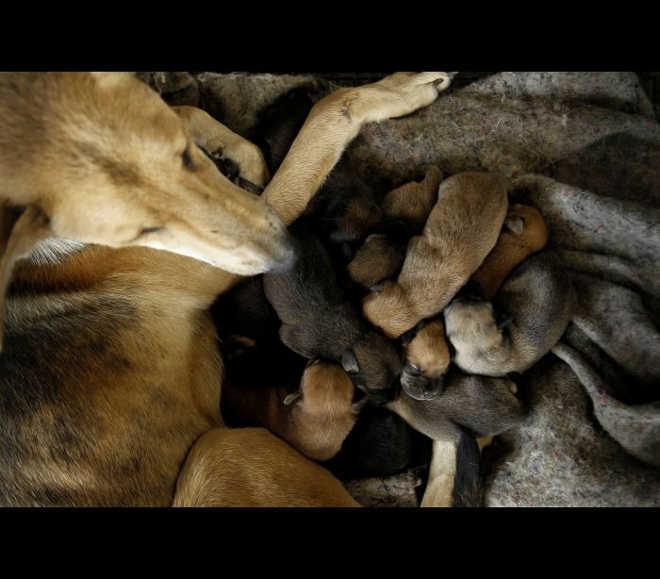 Mais de um milhão de cães abandonados vivem em liberdade na Costa Rica