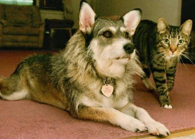 A história inspiradora de uma cachorra abandonada que ajudou a resgatar mais de 1.000 gatos necessitados