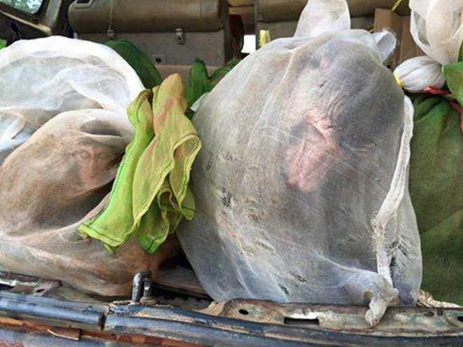Dezenas de macacos são resgatados de dentro sacos em carro de traficante
