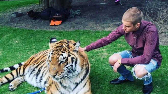 Justin Bieber posa com tigre e PETA alerta: 'Teve sorte de não ter a garganta arrancada'