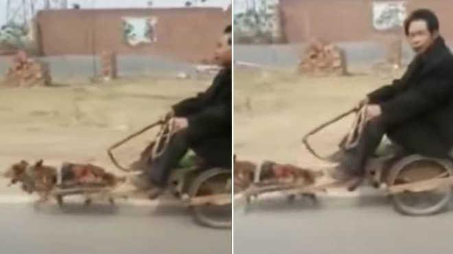 Criticam homem que usou cão pequeno como cavalo