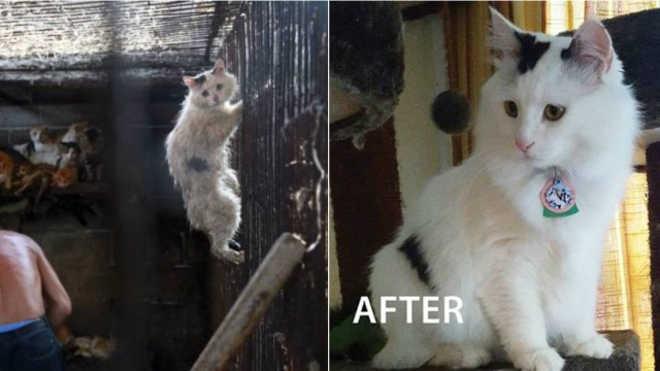 China gato resgatado eua