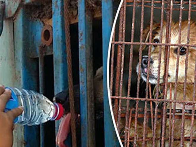 China yulin dogcage 1