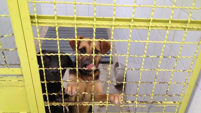 Colombia animais domesticos abandonados