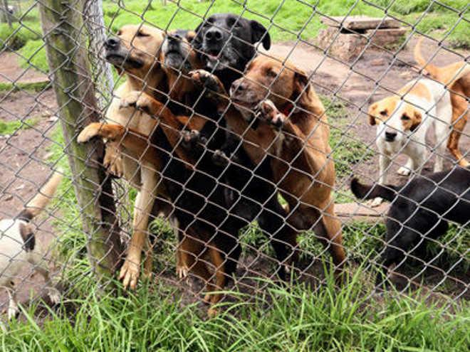 Assustados e desnutridos: o drama dos animais de abrigos na Colômbia