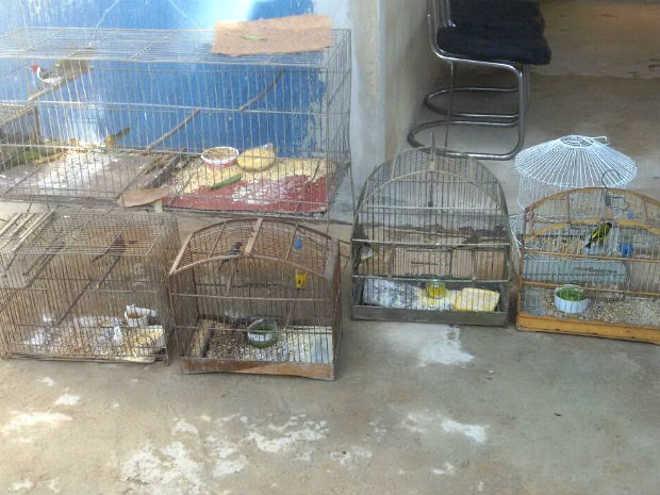 Homem é detido com 12 pássaros silvestres em gaiolas no Gama, no DF