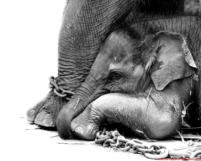 Espanha: Até 46 municípios galegos agem para proibir os circos com animais