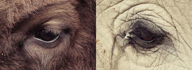 Projeto fotográfico comovente retrata o olhar de animais em cativeiro