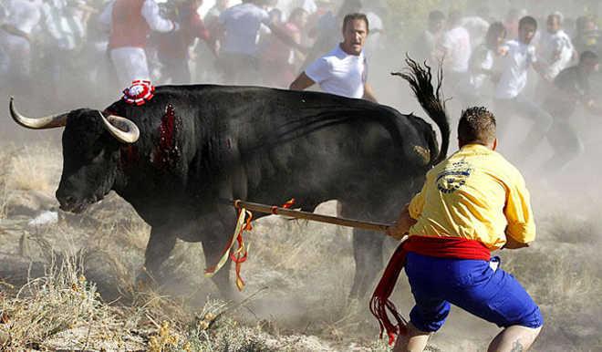 ESPANHA veterinarios Toro de la Vega 02
