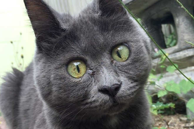 Gato com cara de surpresa conquista a web, mas tem pouco tempo de vida