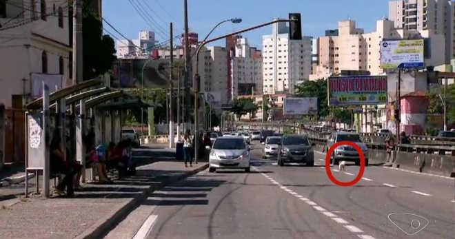 Cachorro é atropelado na descida da Terceira Ponte, em Vila Velha, ES