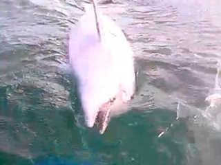 ES golfinhos golfinho morto