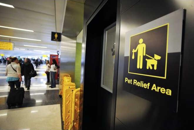EUA NovaYork banheiro animais