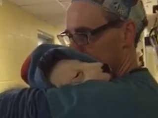 Dia do Abraço: vídeo de médico com filhote após cirurgia viraliza na web