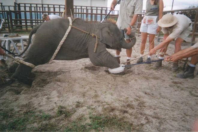 EUA bebes elefantes treinados circos