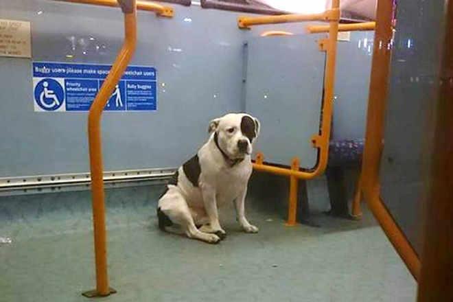 Cão 'abandonado' em ônibus reencontra tutora e volta para casa